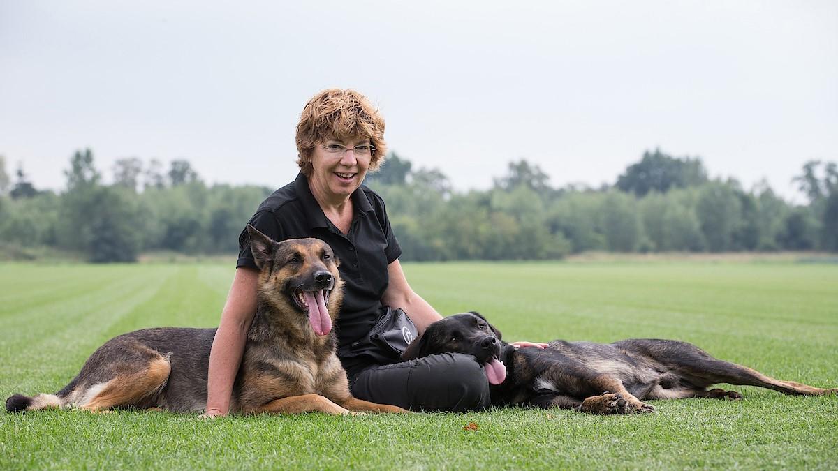 Hondenschool Brabant Limburg